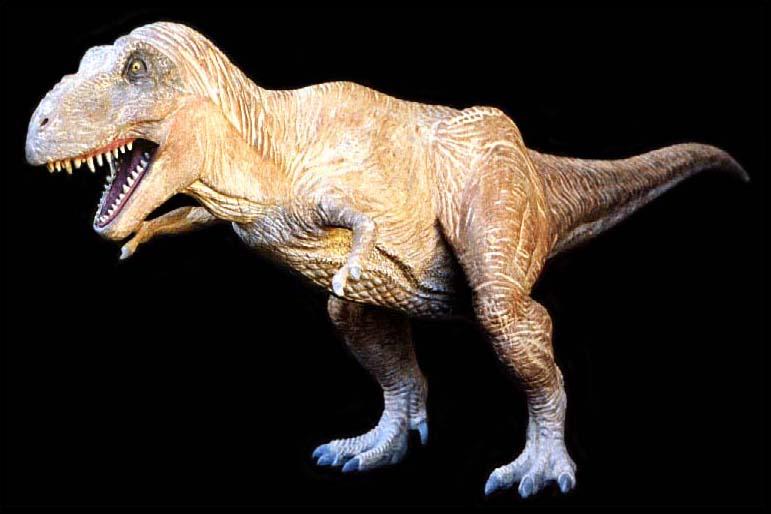 Award-Winning Tyrannosaurus Rex Model